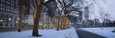Trees Decorated with Christmas Lights, Illinois, Chicago, USA