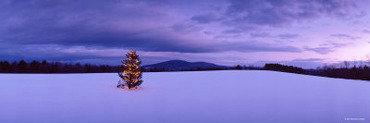 Decorated Christmas Tree in a Snow Covered Landscape, New London, New Hampshire, USA